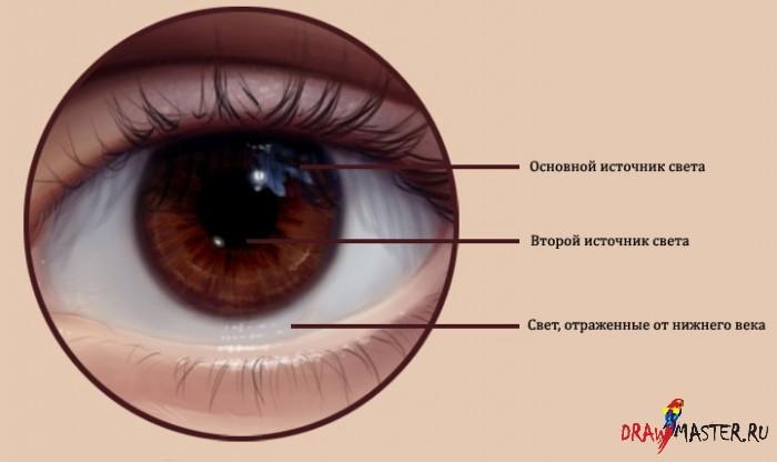 Как рисовать реалистичные глаза