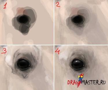 Как рисовать лошадей - Тонкости, приемы, советы