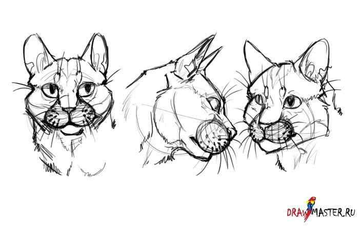Как нарисовать Кошачью голову