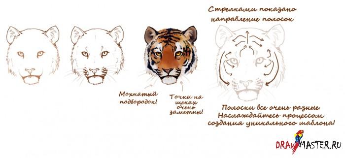Как нарисовать диких кошек