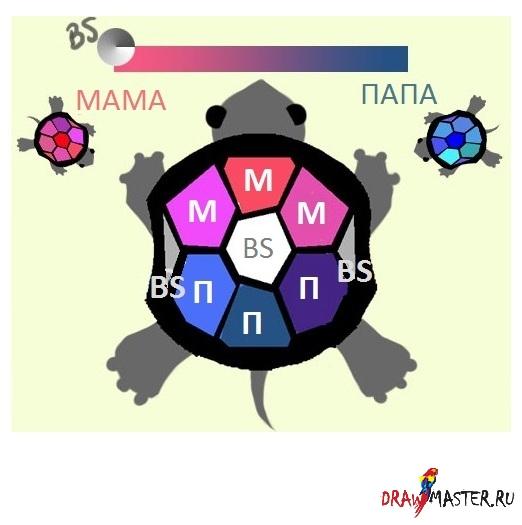 Как составить Цветовую схему на образе черепахи