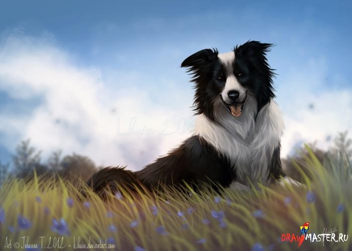 Как рисовать собачью Шерсть