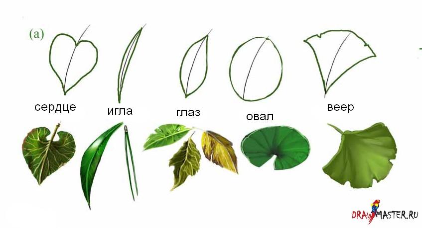 Как быстро рисовать листья