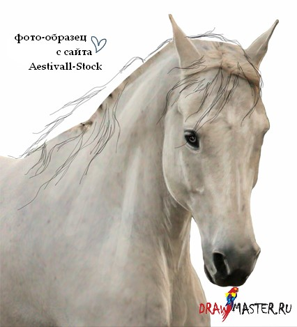 Как сделать гриву для лошади фото 162