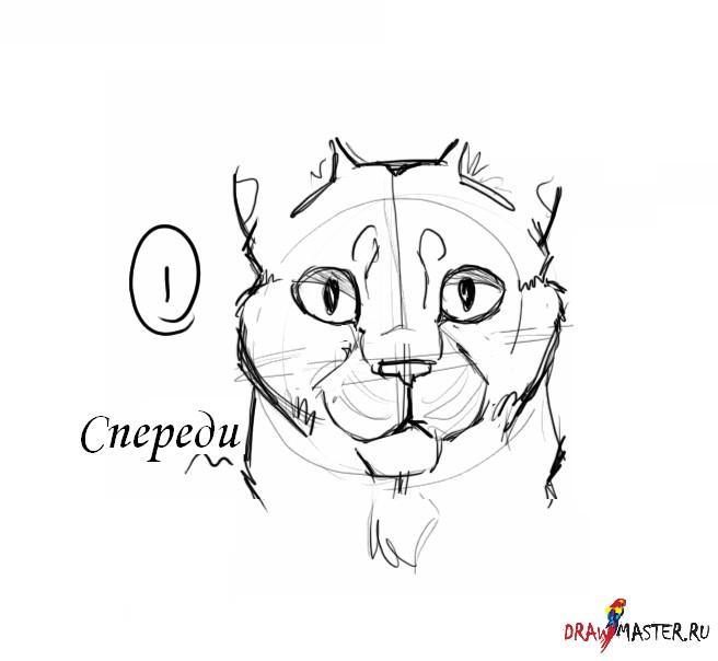 Как нарисовать голову кот